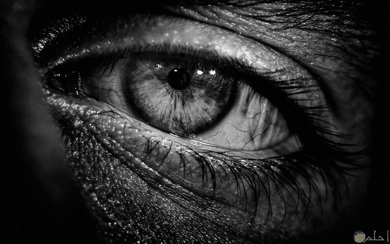 صورة مؤثرة وحزينة للعين