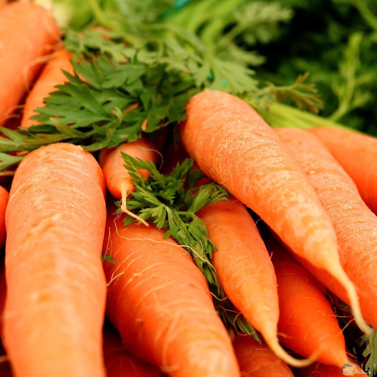 صورة عن خضار الجزر الذي يعتبر من الخضراوات الشتوية ويحتوي علي الفيتامينات المفيدة للجسم