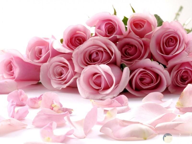 صورة ورد جميل يعبر عن الحب