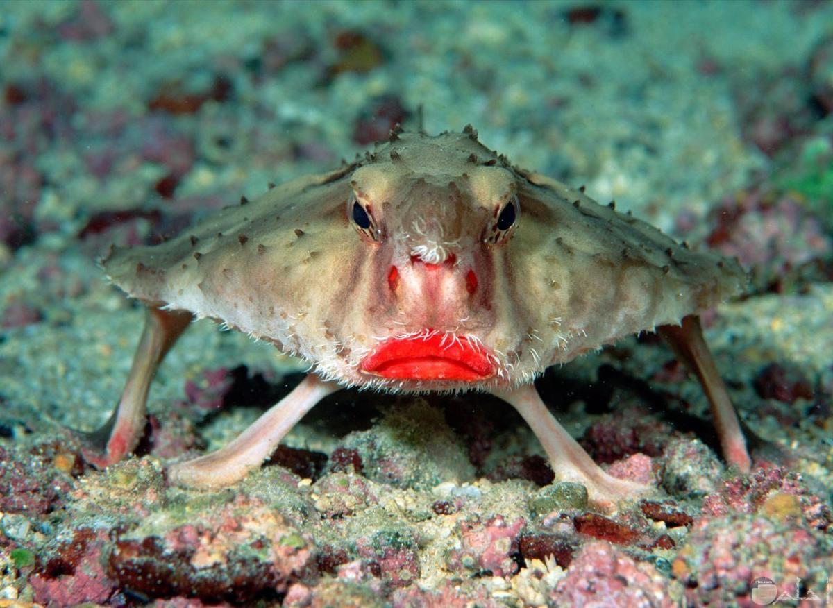 صورة غريبة لكائن بحري وهو مبتئس وحزين