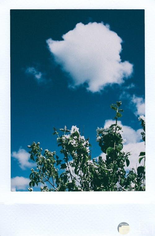 صورة تظهر جمال السماء والسحاب والشجر