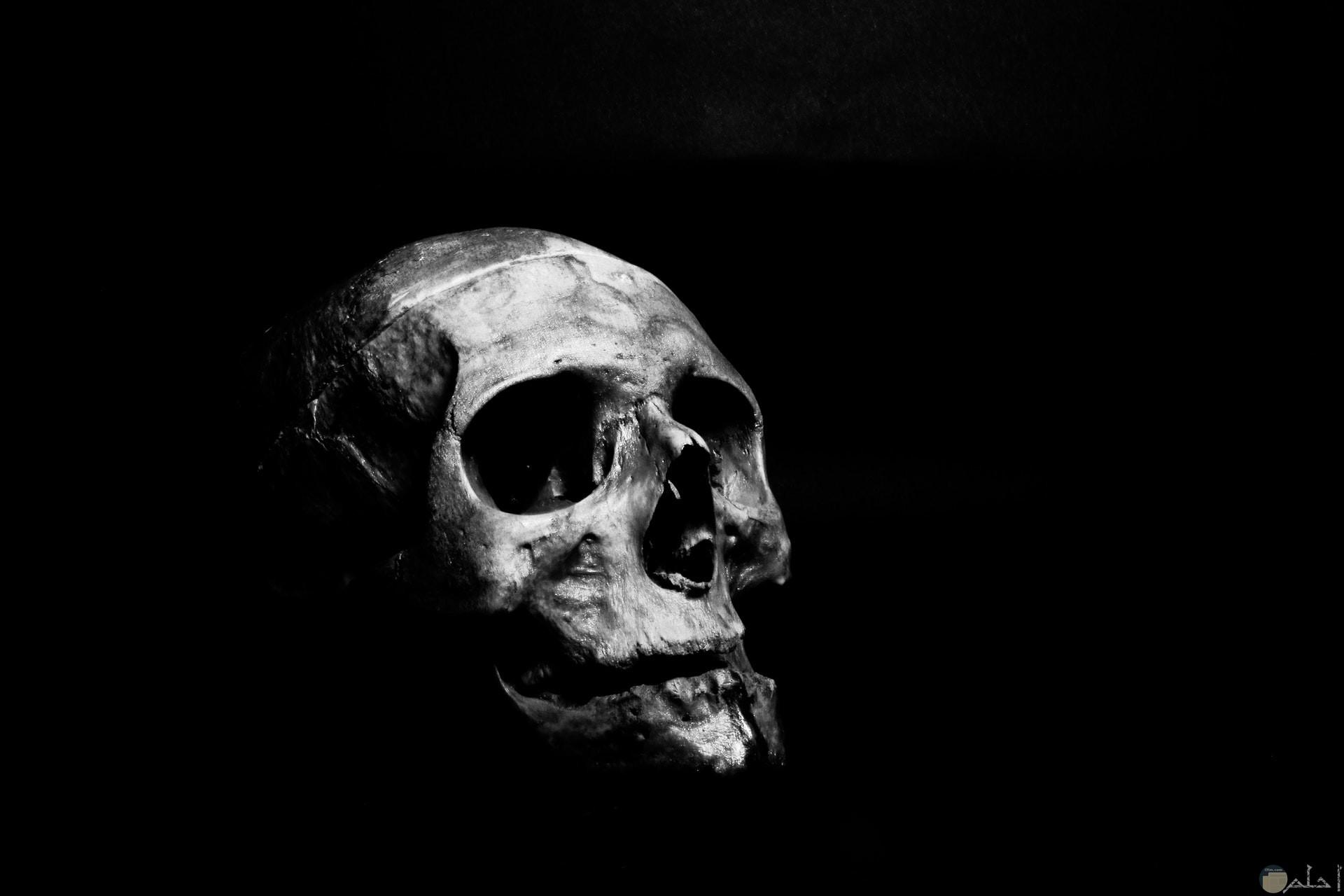 صورة مخيفة ومرعبة لعظام جمجمة إنسان ميت مع خلفية سوداء