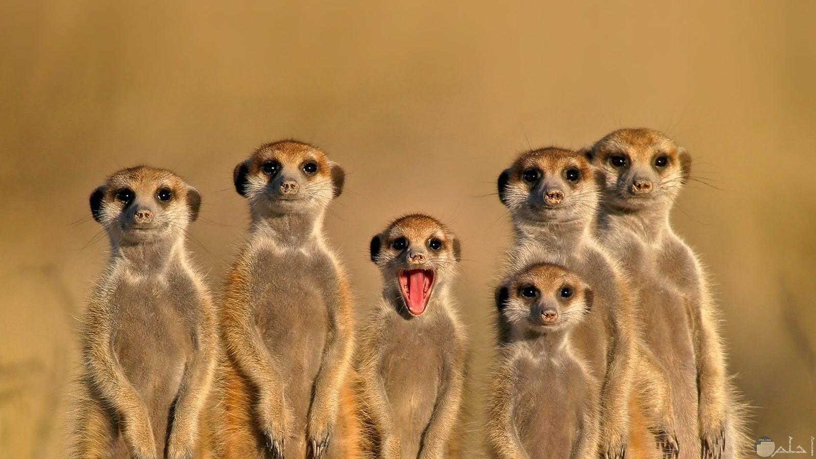 صورة مضحكة للفيس بوك لمجموعة من الحيوانات بينهم واحد مضحك