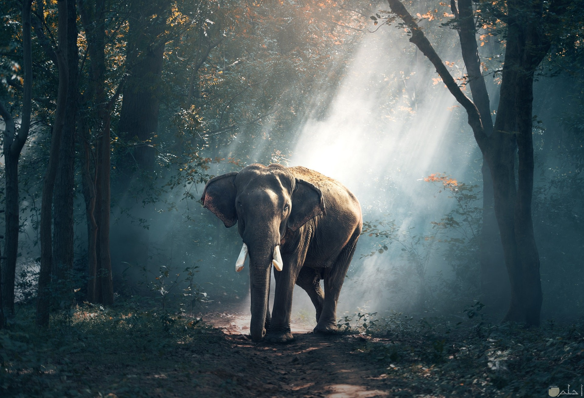 صورة جميلة ومميزة للطبيعة وحيوان الفيل فيها
