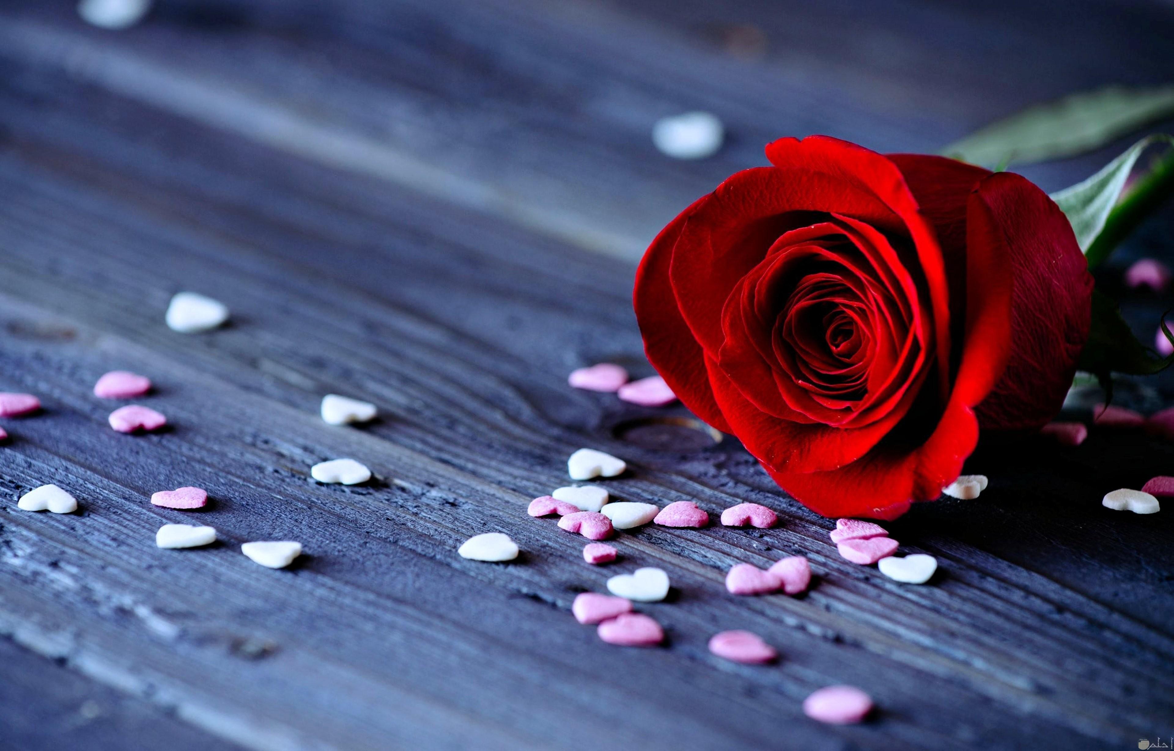 صور لورده حمراء جميلة حولها مجموعة من القلوب الصغيرة