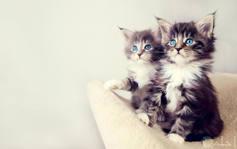 صور مبهجة لقطط