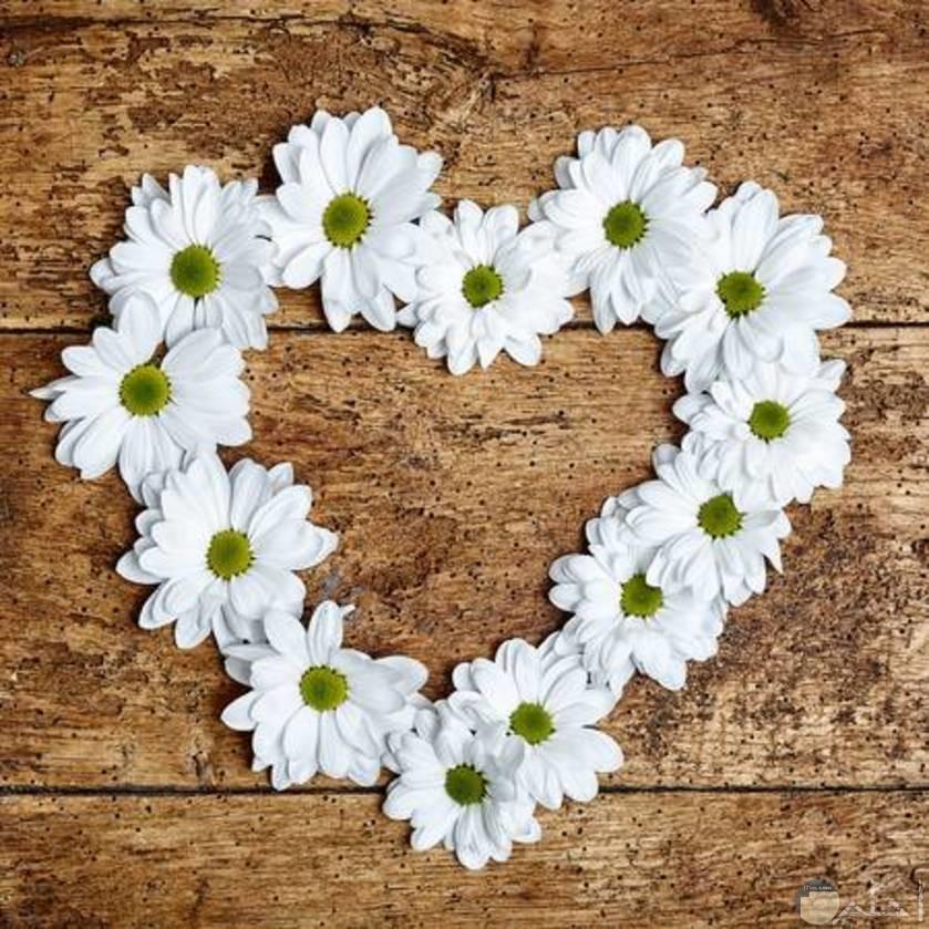 قلب أبيض من زهور الياسمين الرقيقة