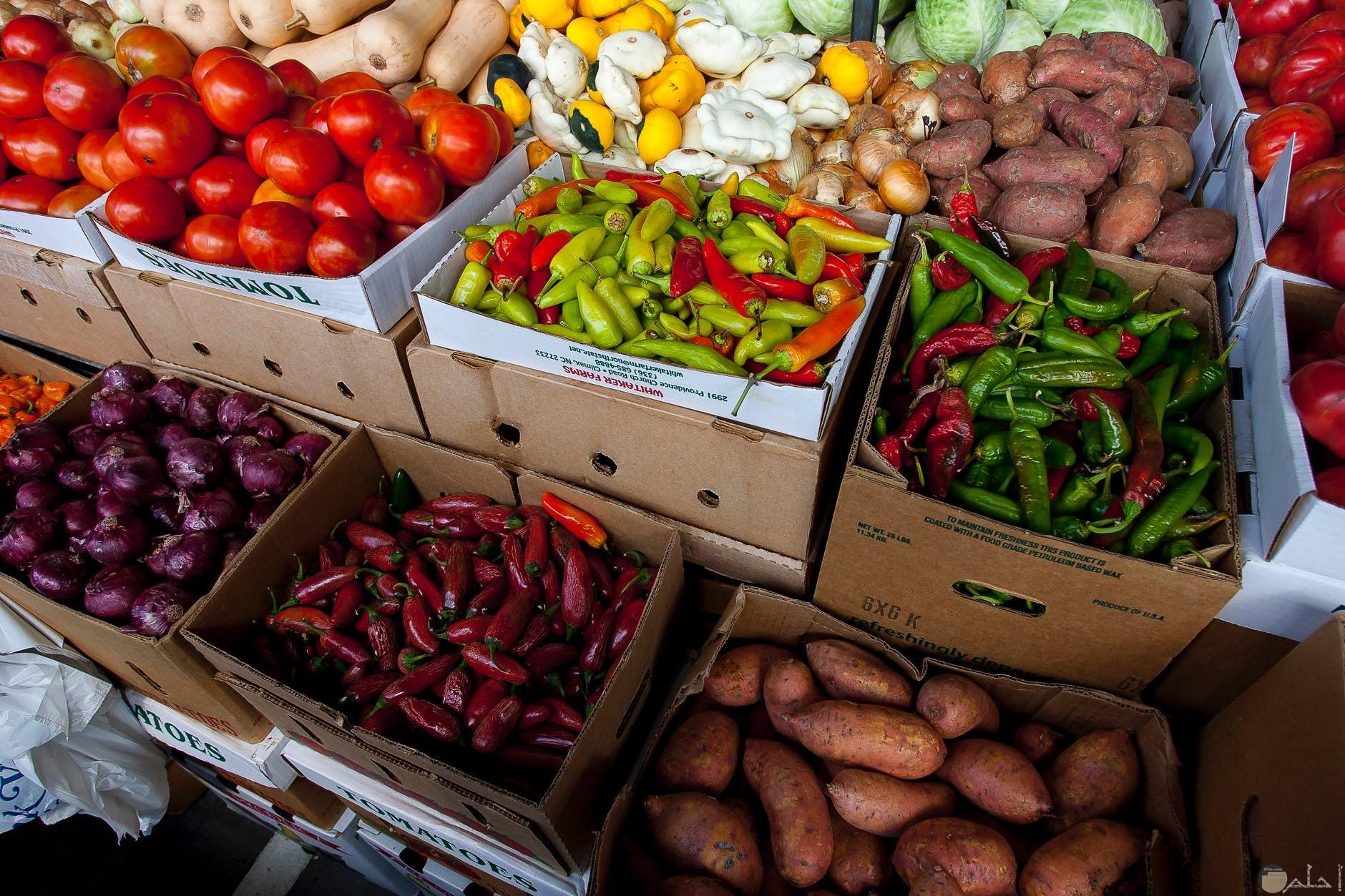 كل انواع الخضروات