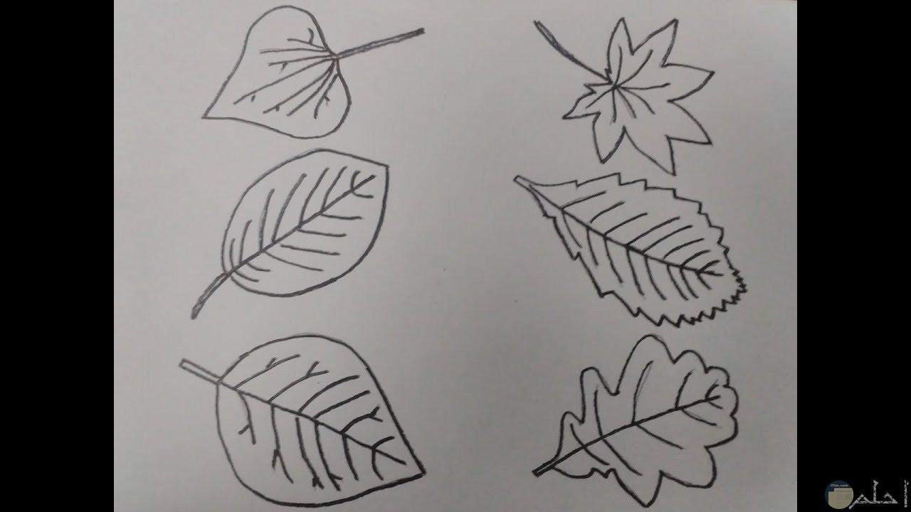 كيف ترسم ورق الشجر