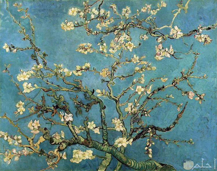 لوحة شجرة اللوز لفان جوخ