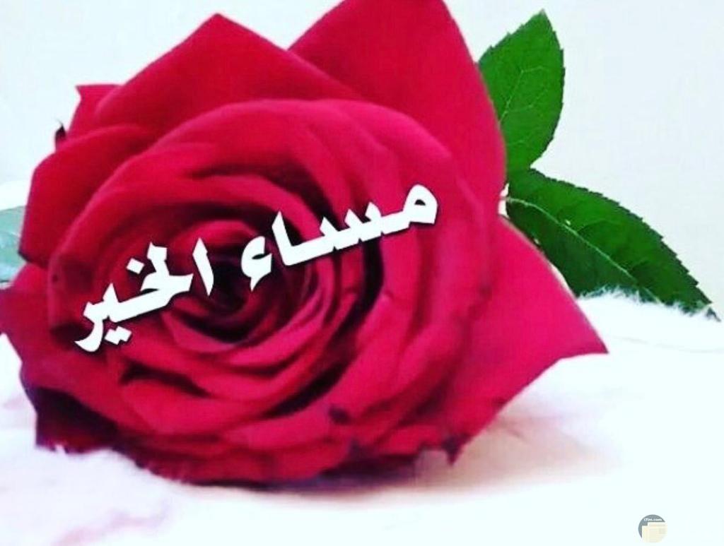 زهرة لونها احمر مكتوب عليها مساء الخير