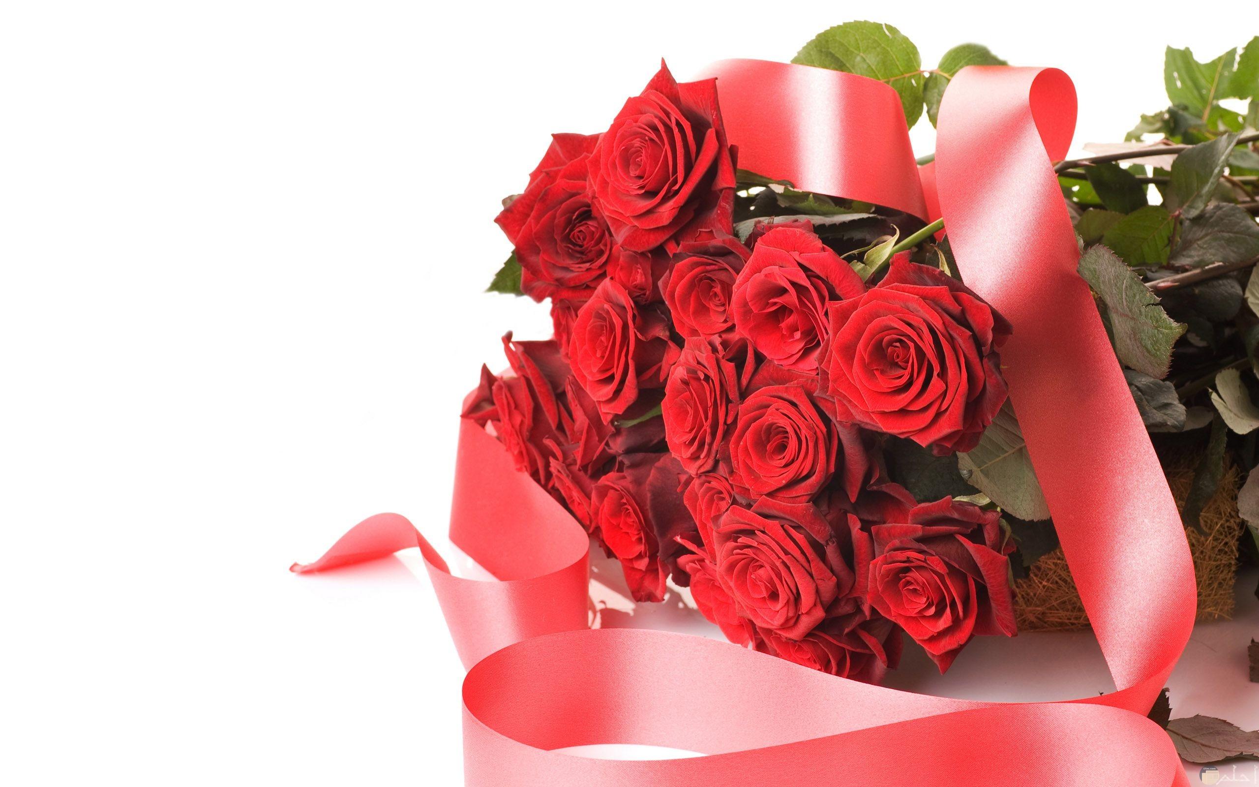 صورة باقة ورد أحمر رومانسي جميلة ومميزة