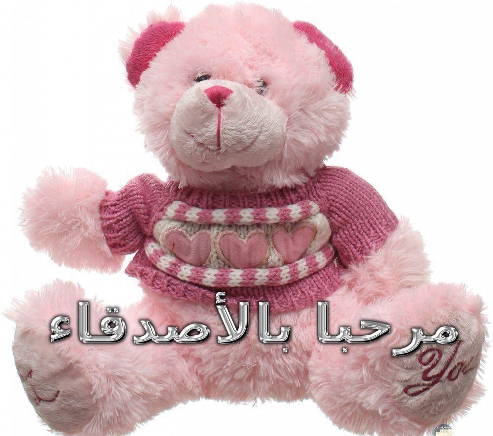 صورة دب مدون علية مرحبا بالاصدقاء