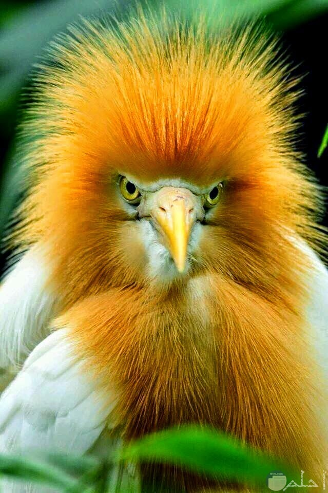 طائر نادر رائع جدا