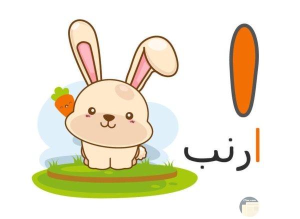 ألف أرنب