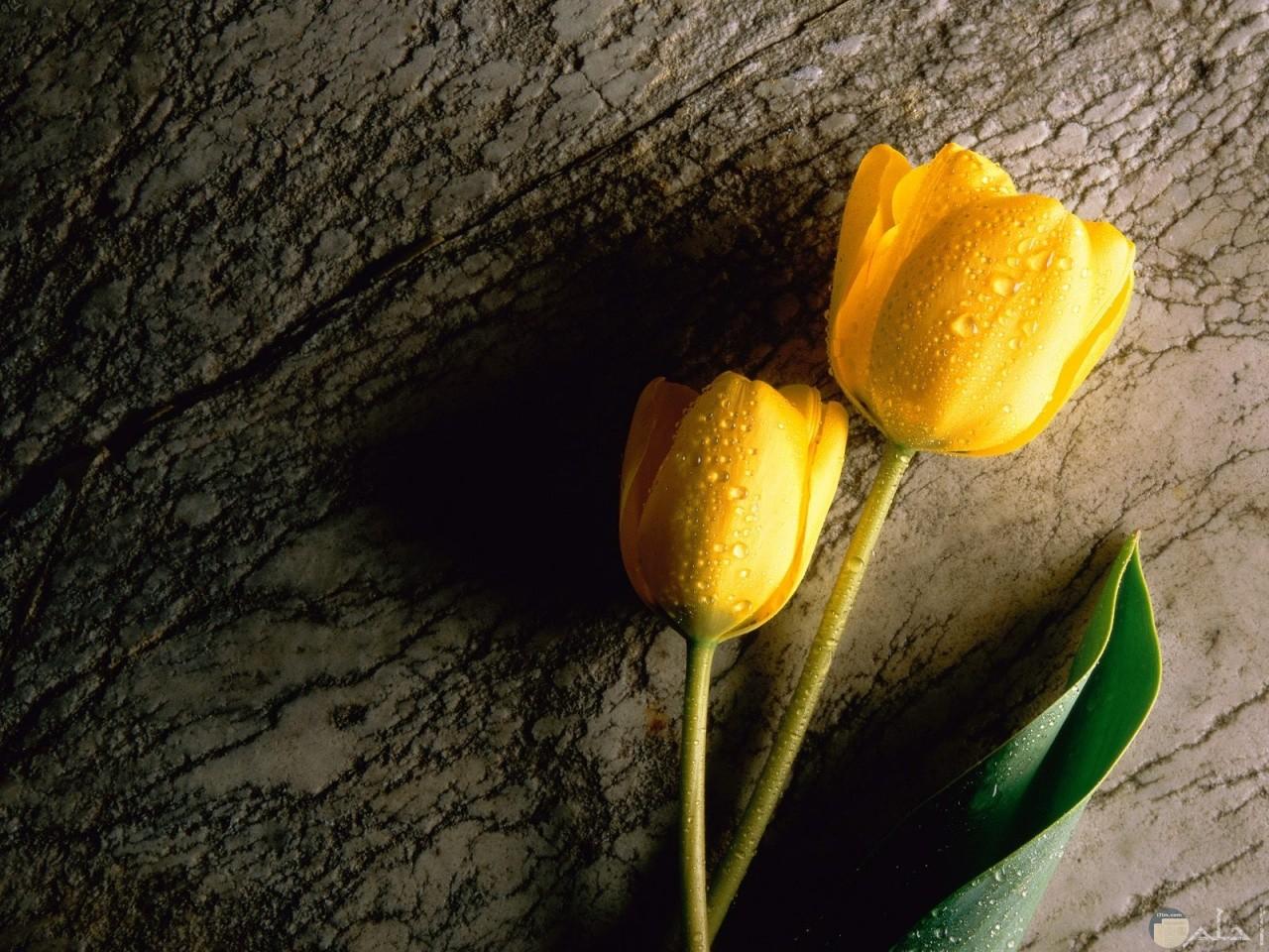 صورة ورد اصفر