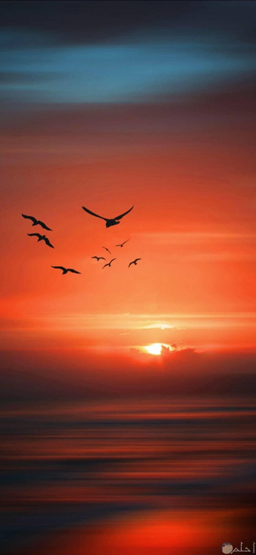 صور عميقة مدهشة لجمال الطيور وغروب الشمس