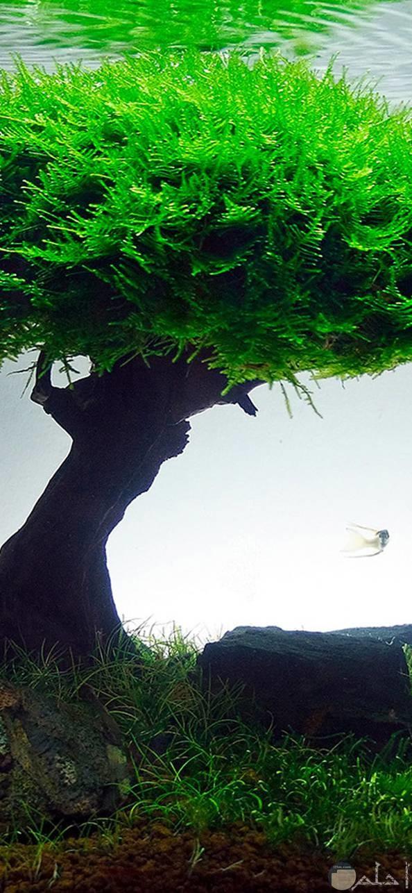 صور عميقة روعة لشجرة