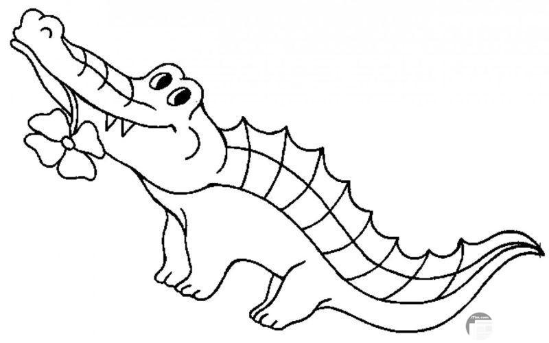 تمساح كيوت