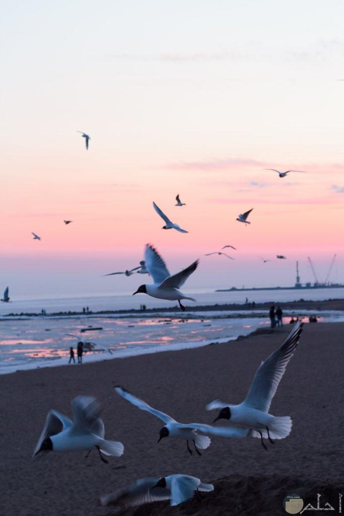 صور طيور يطيرون في السماء بجوار البحر