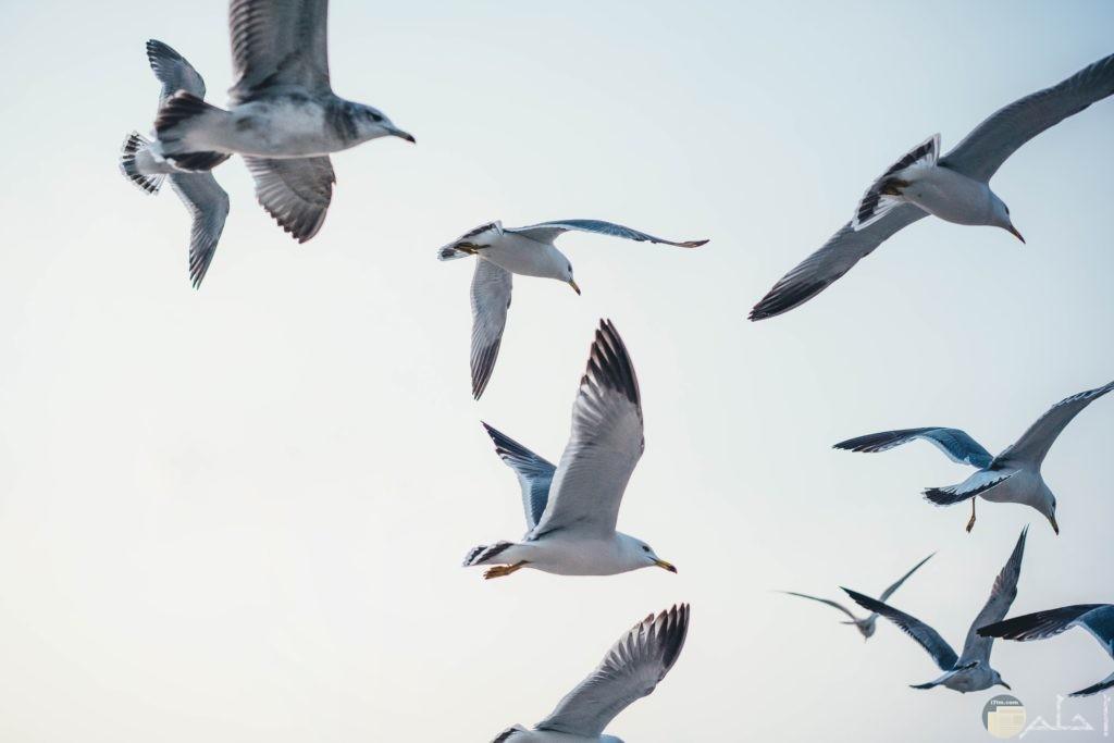 طيور تطير في السماء باللون الأبيض