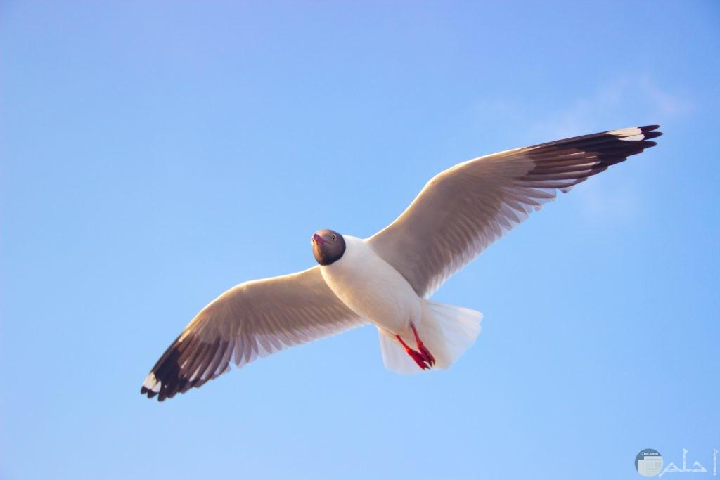 صور طير يحلق في السماء بأرجل حمراء