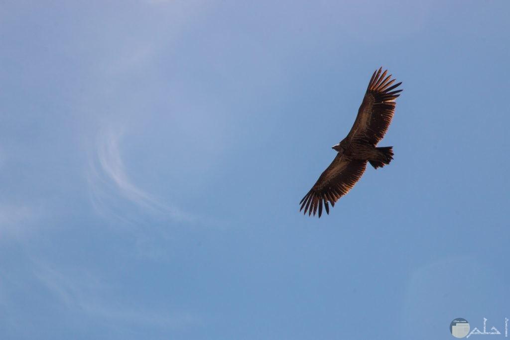 طير يطير في السماء باللون البني
