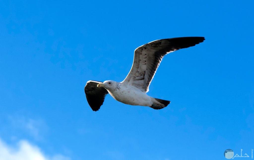 طير في السماء باللون الأبيض