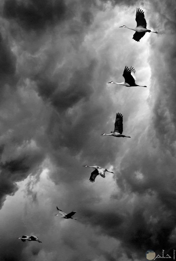 طيور تطير في السماء بالترتيب