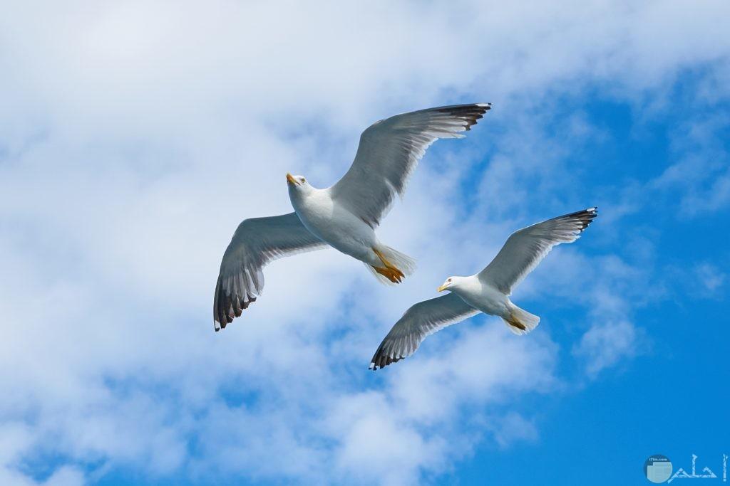 صور طيور يطيرون في السماء