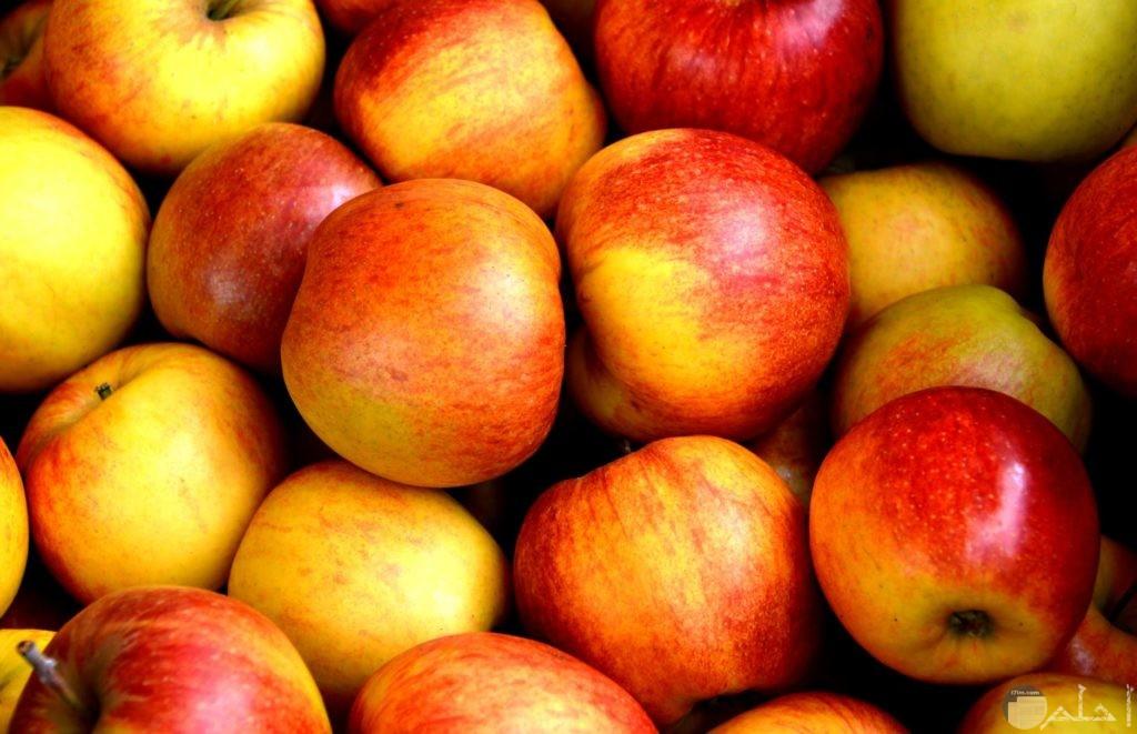 اجمل صور تفاح مع جمال روعة اللون الأحمر والأصفر