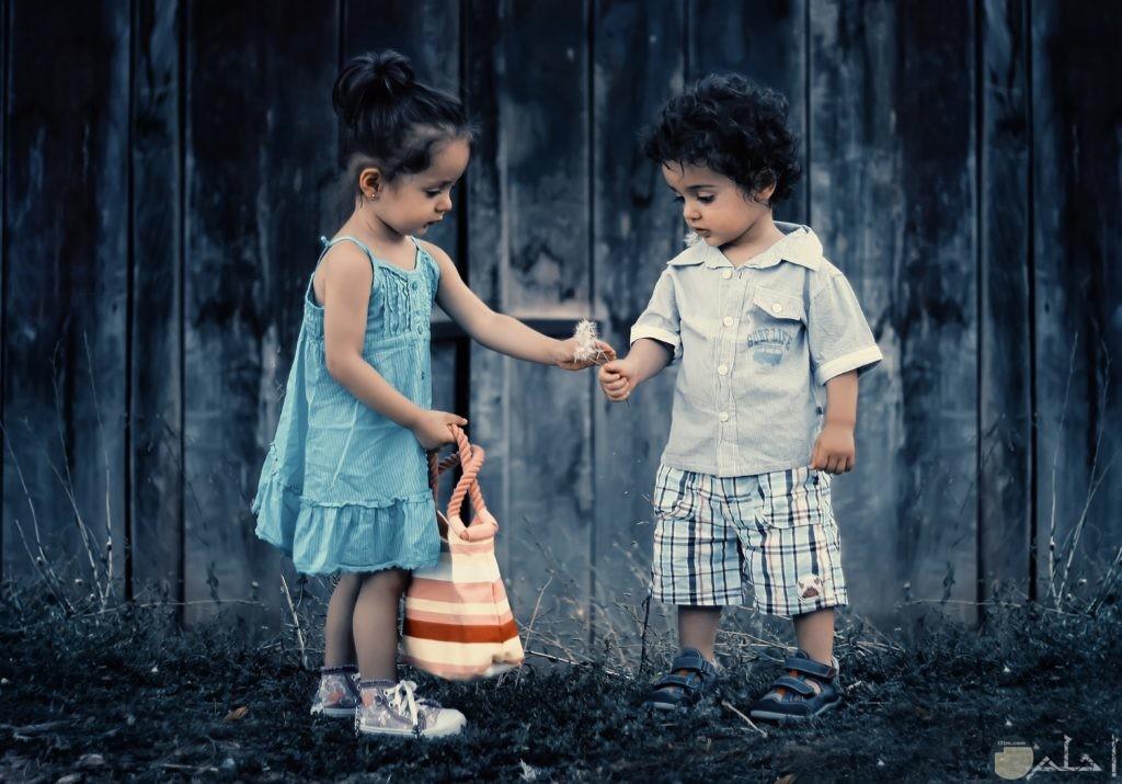 جمال ورقة ملابس الأطفال الصيفية