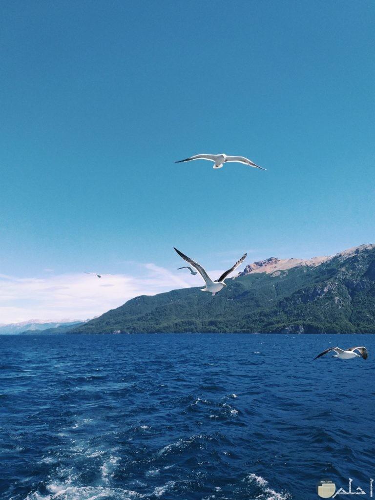 طيور تطير فيوق البحر
