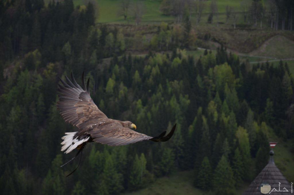 صور طير يحلق في السماء