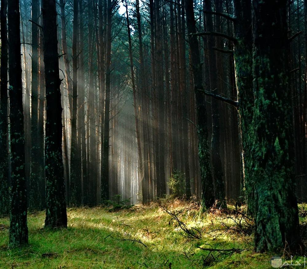 جمال الغابات مع اللون الأخضر