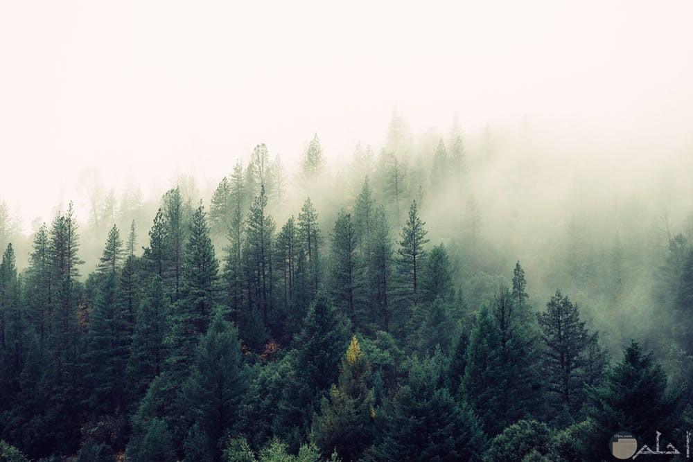 صور غابات وأشجار