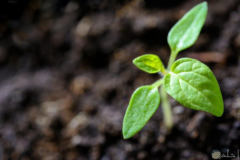 أجمل صور نباتات