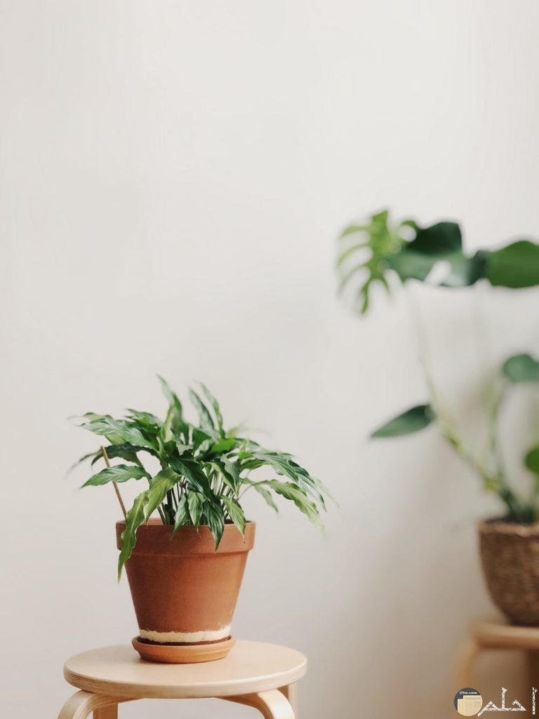 صور نباتات جميلة