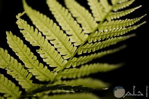 نبات اخضر رائع