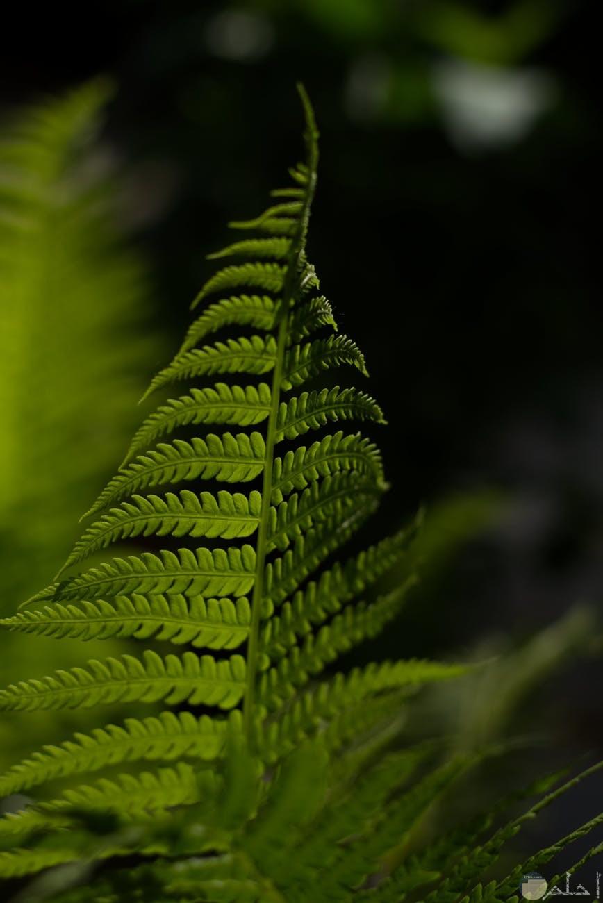 صور ناتات على شكل فرع شجرة