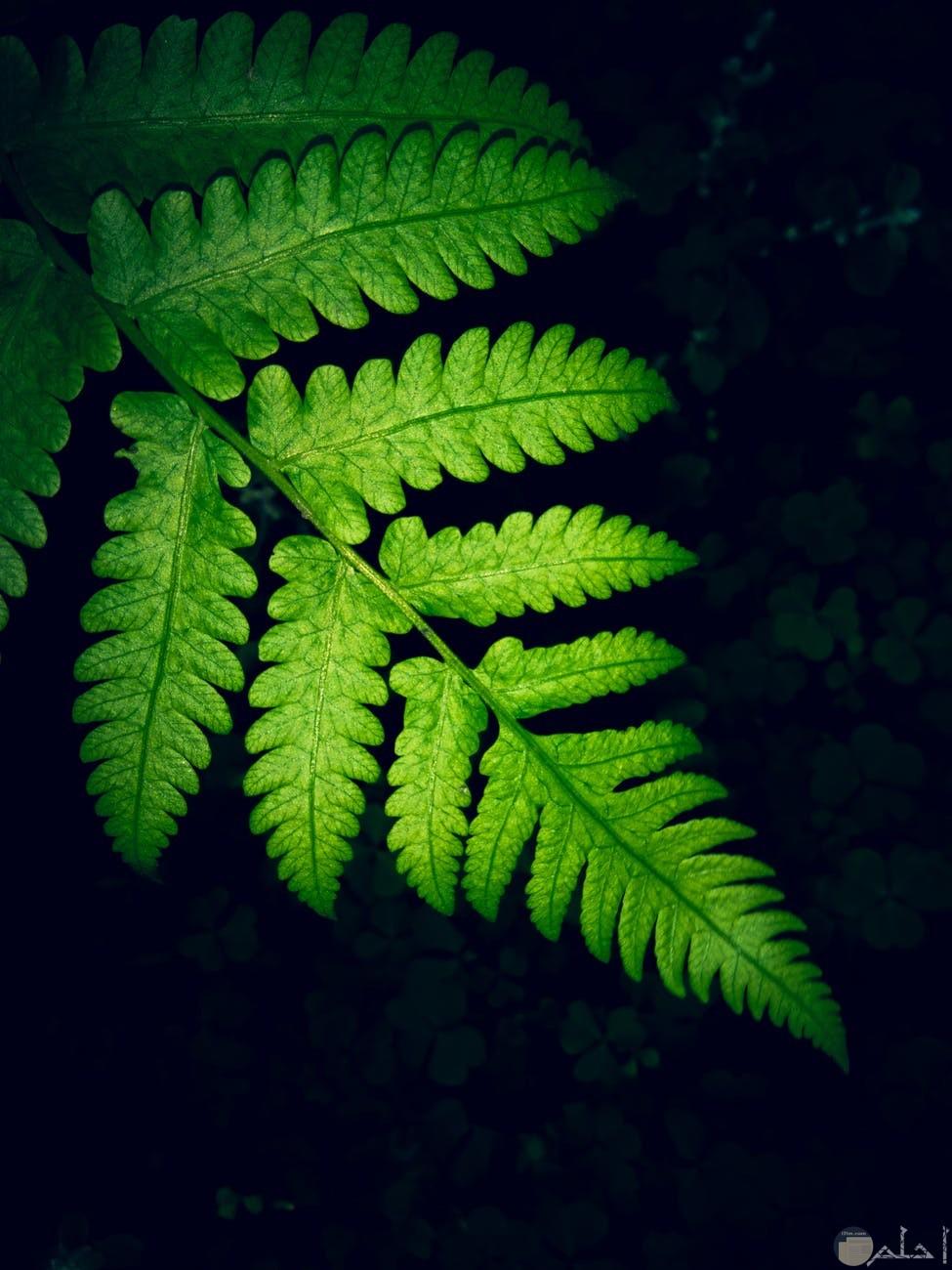 صور نباتات خضراء بالظلام