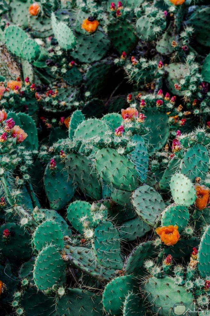 صور نباتات رائعة