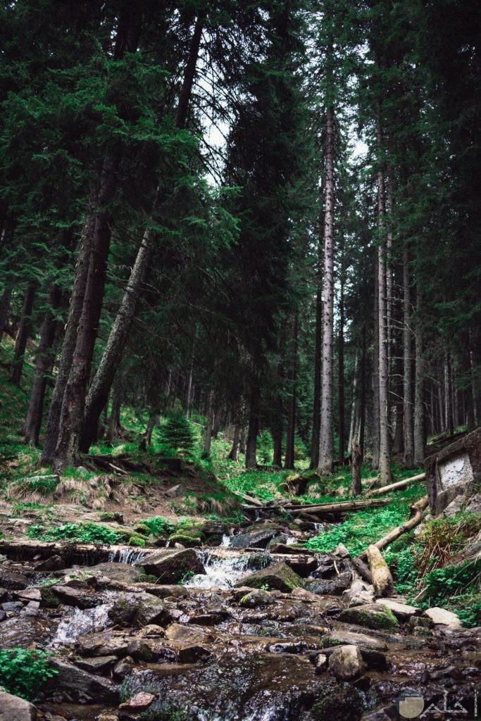 جمال الغابات مع الصخور
