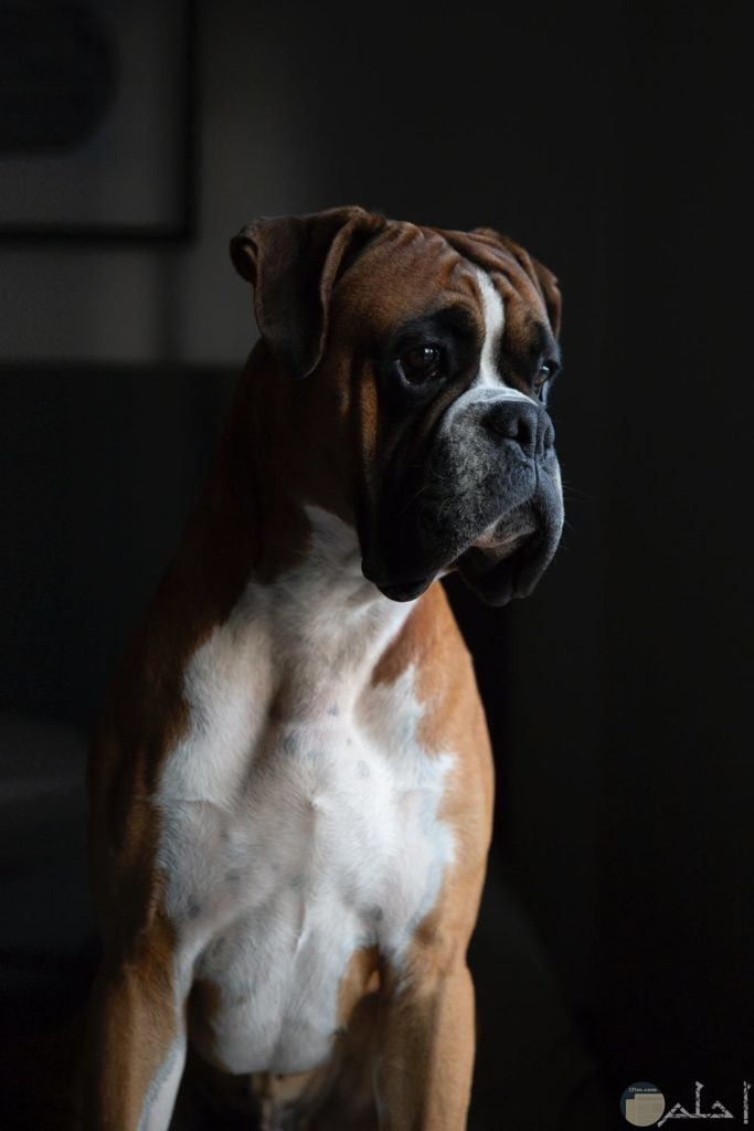 فصيلة من الكلاب النادرة