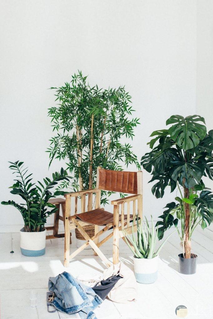 صور نباتات تحفه