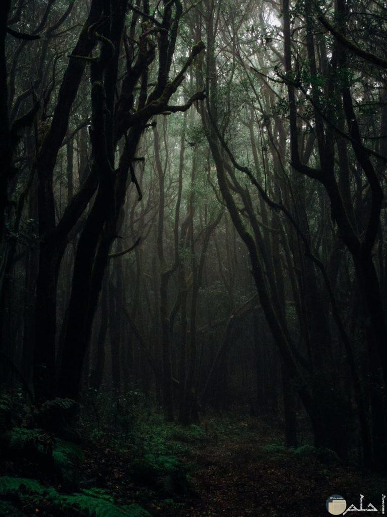 صور الغابات ليلا مدهشة