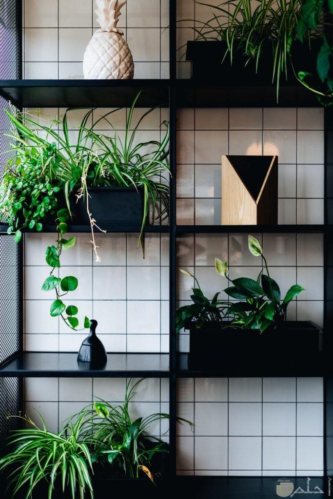 صور نباتات مختلفة