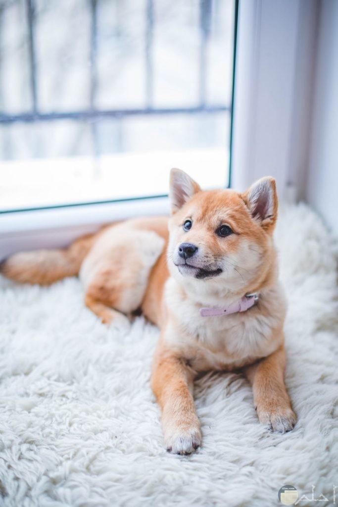 أجمل صور كلب بالمنزل