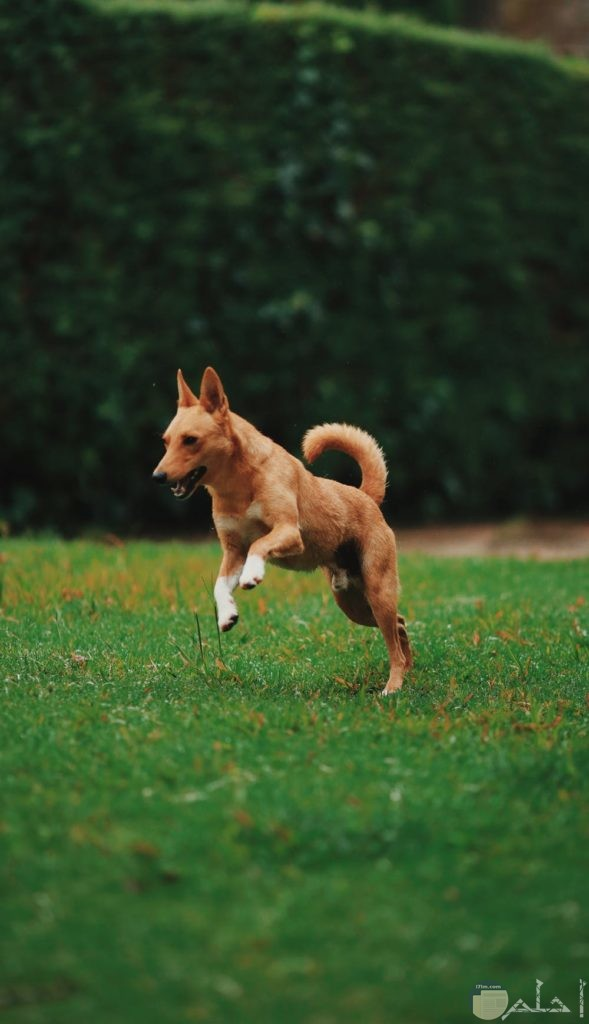 صور كلب يلعب