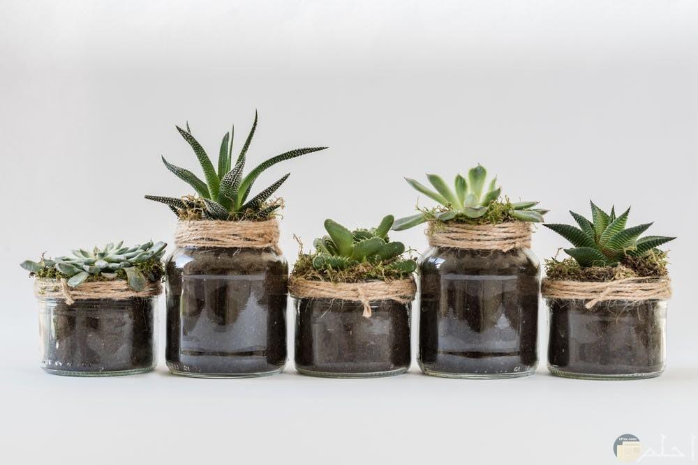 صور نباتات مميزة